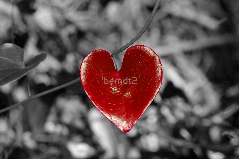 Love Heart2 (horizontal) by berndt2