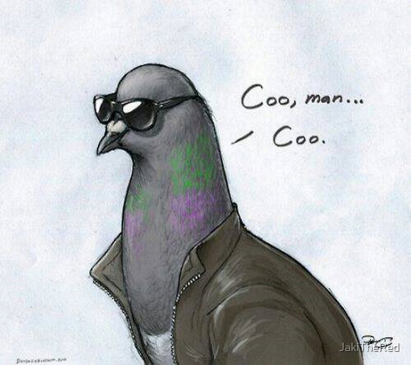 Coo 39 man coo 39 pigeon canvas prints by jakithered for Www coo