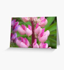 Pink Lupin Greeting Card