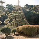 Japanese Garden by Adrian Lander