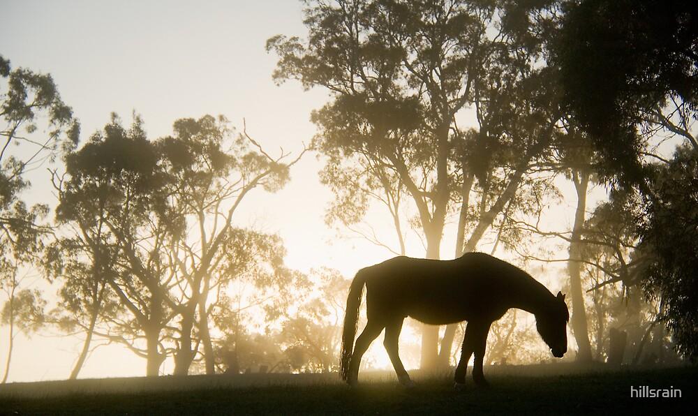 Breakfast in the mist by hillsrain