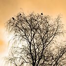 Sepia Roosting birds by Robert Gipson