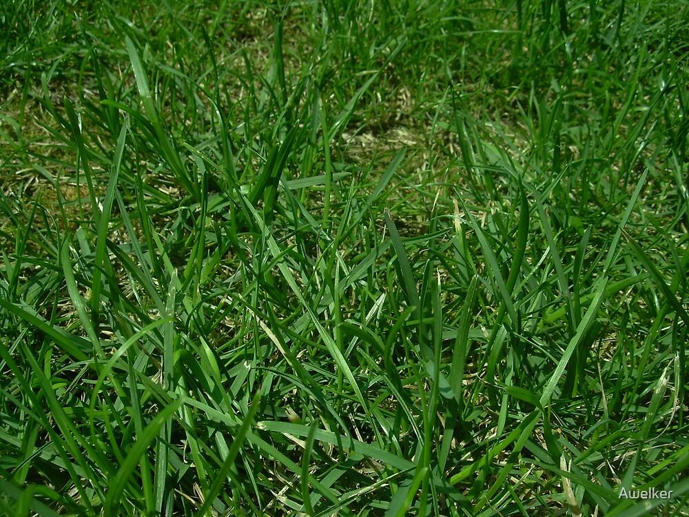 Grass by Awelker