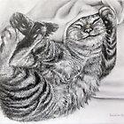 Tabby Cat by awindingpath