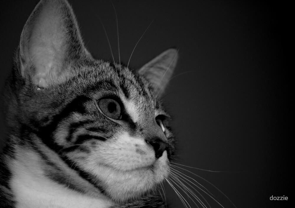 Kitten BW by dozzie