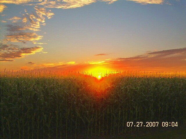 corn sunset by Jaclyn Clemens