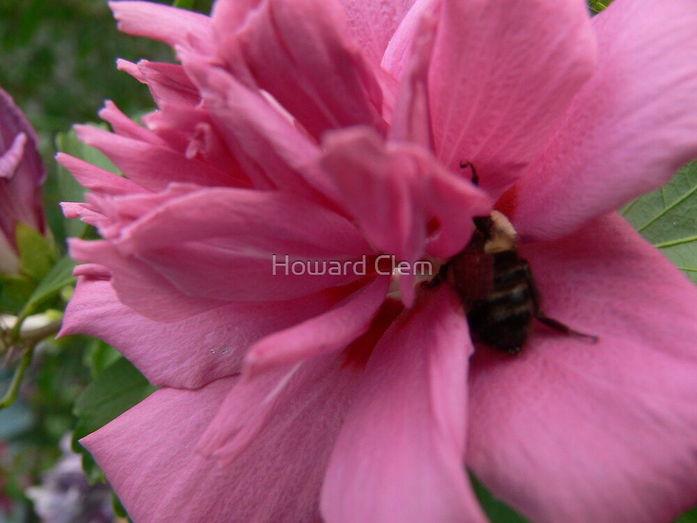 beezy bee by Howard Clem
