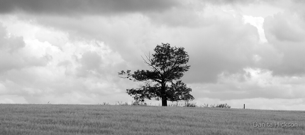 All Alone - Black & White Panoramic by Danita Hickson