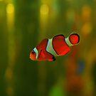 Nemo by artkitecture