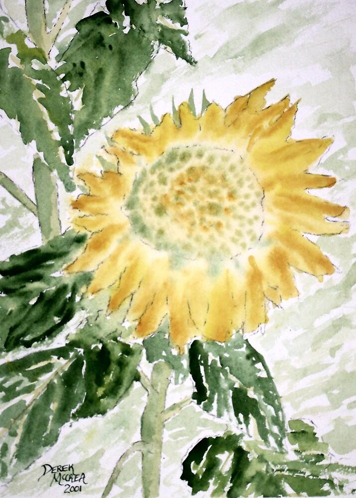 Lone Sunflower by derekmccrea