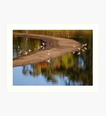 Laratinga Wetlands I Art Print