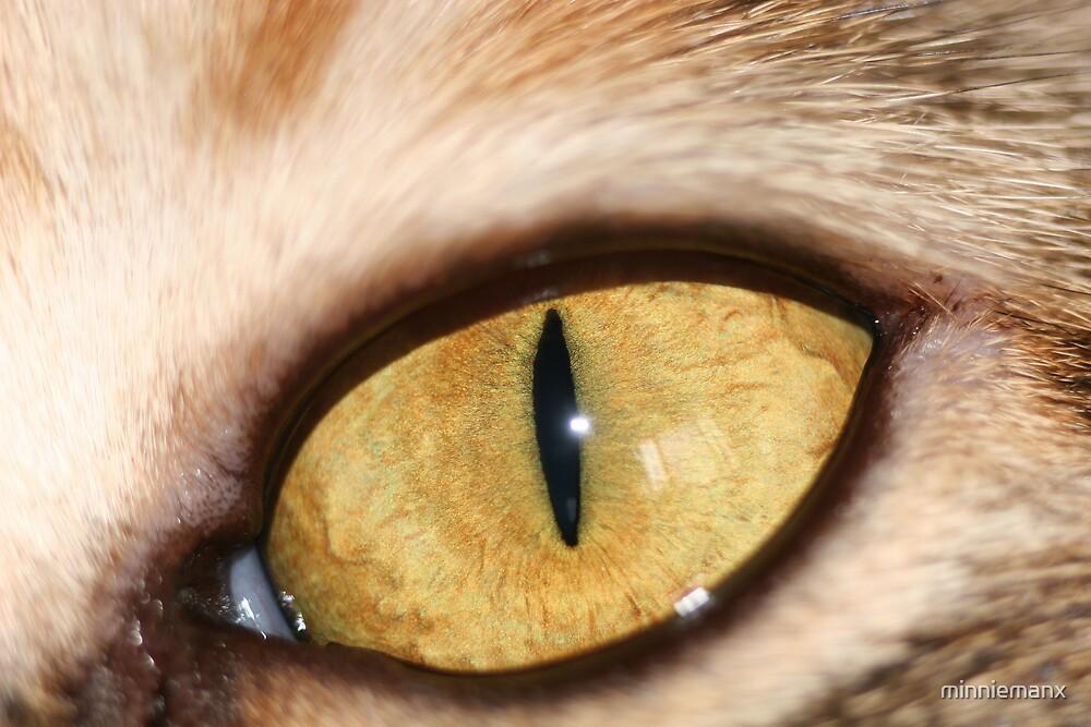 The Cat's Eye by minniemanx
