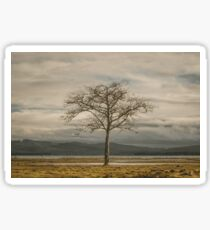 Lone Tree - landscape photography tree trees sky blue gray grass ocean adventure hiking love digital Sticker
