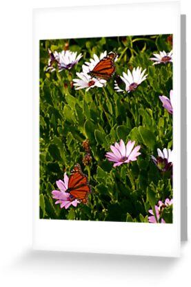 Butterflies  by gypsygirl
