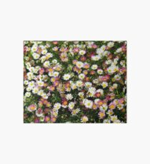Candy Coloured Daisies Art Board