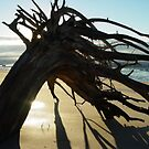 McEwens Beach sunrise by Jayson Gaskell