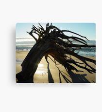 McEwens Beach sunrise Canvas Print