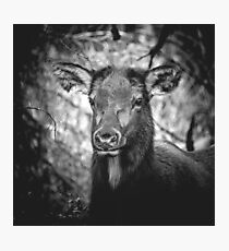 ADORABELK - portrait of a highland elk nature wild black and white funny animals wall tapestry love Photographic Print