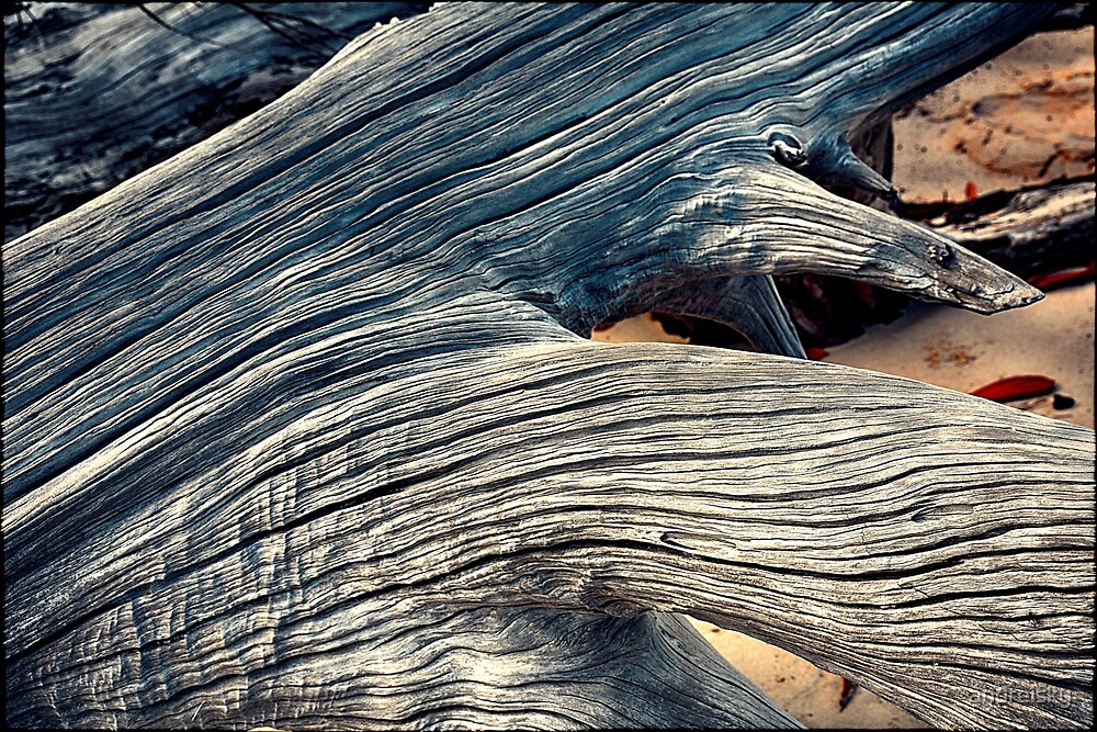 Driftwood III by andreisky