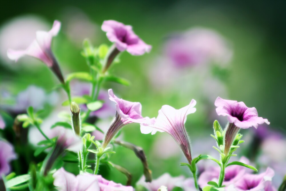 Garden by sara montour