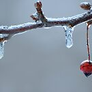 Frozen berry by Laurie Minor