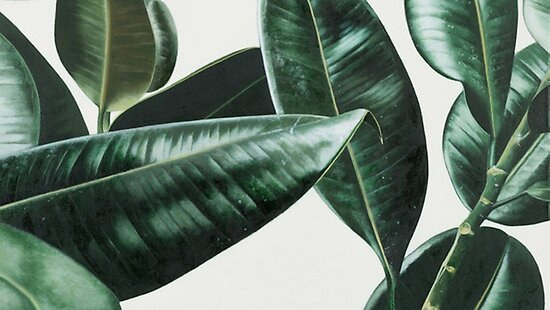 tumblr plant posters by rhishiplarry redbubble