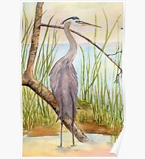 Great Blue Heron- Morning Reflections Poster