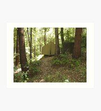 woodlands Northern california REDWOODS Art Print