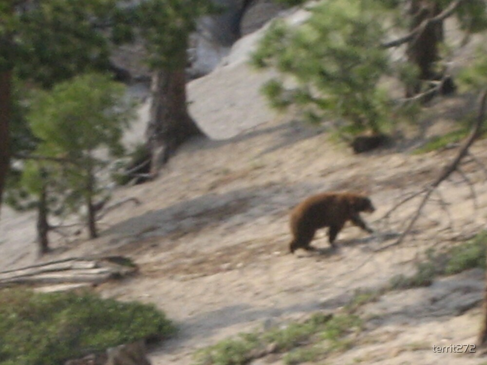 bear The Ridge north of the strip south lake tahoe by territ272