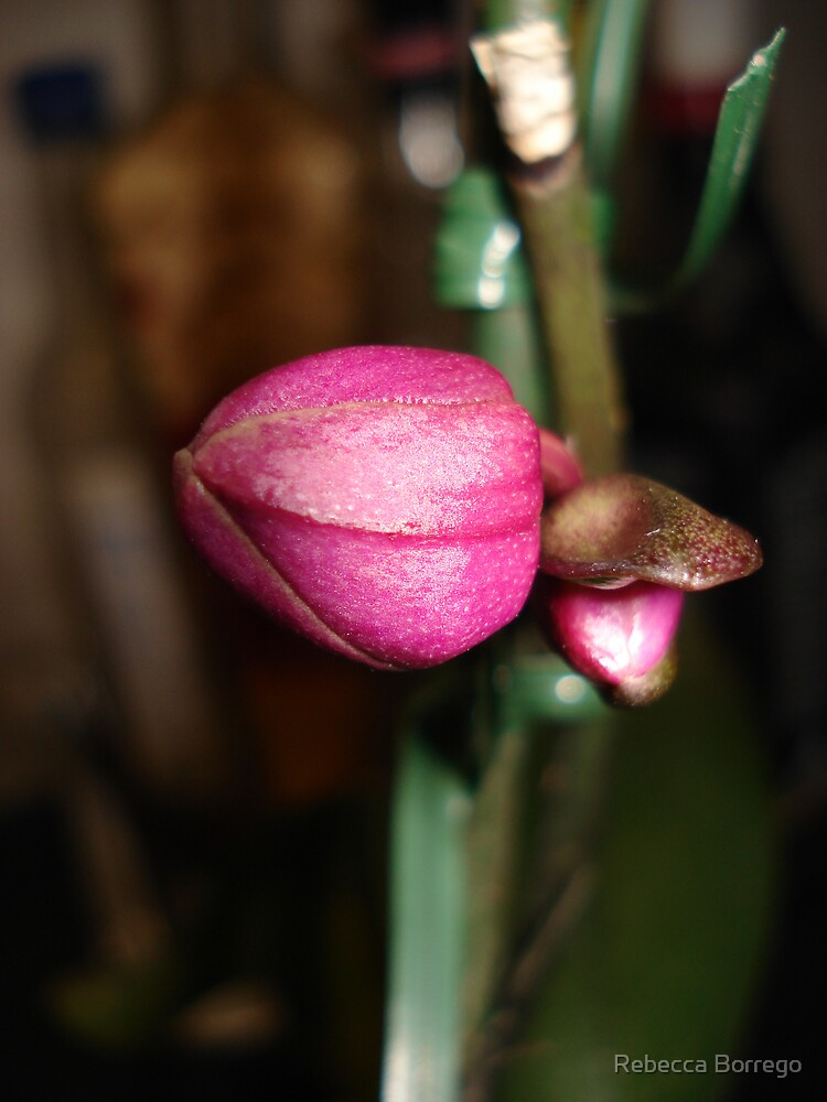 The Birth of an Orchid by Rebecca Borrego
