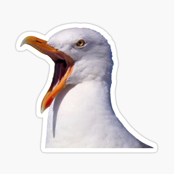 Screaming Seagull Sticker