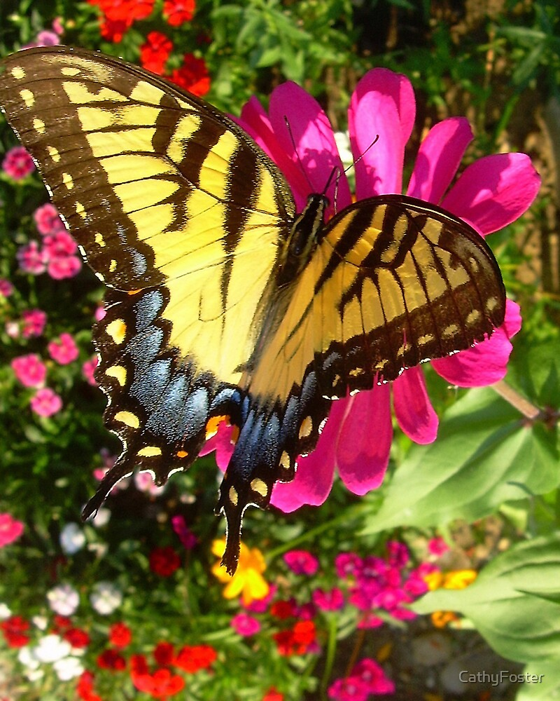 butterfly extralarge by CathyFoster