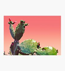 Flowering Cactus Photographic Print