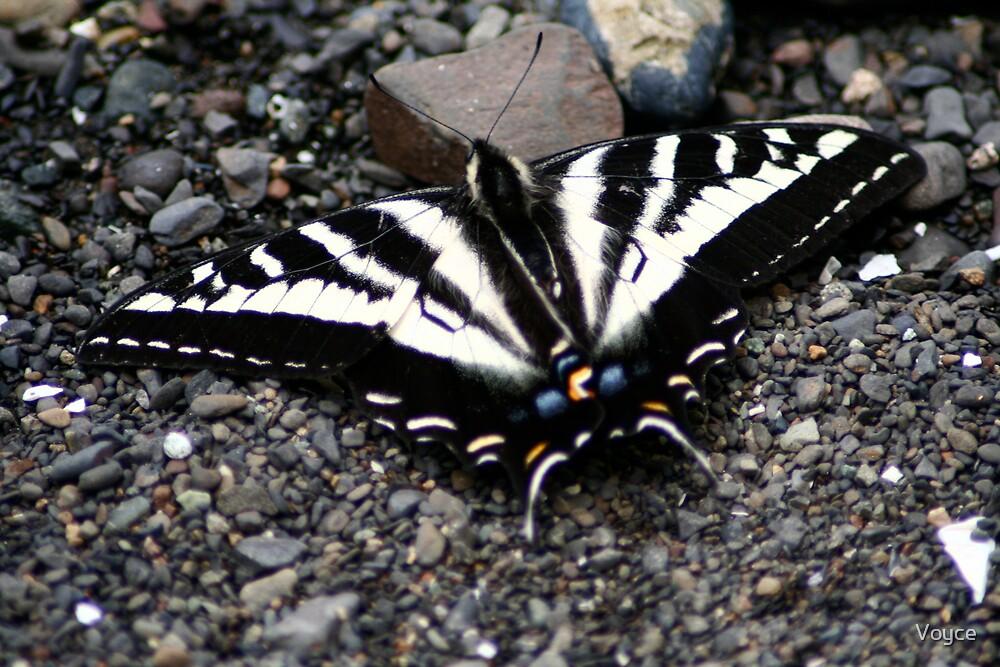 beach butterfly by Voyce