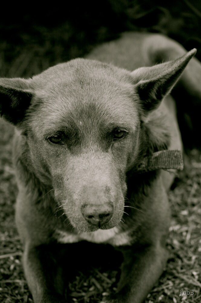 Old Dog by jwb3
