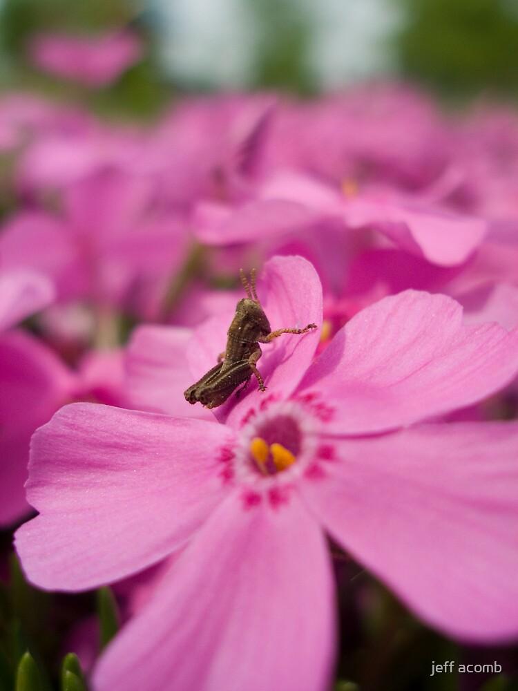 Little grasshopper by jeff acomb