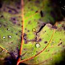 Leaf macro by Tammy Hale