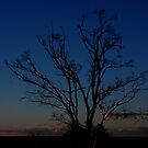 Blue tree by jwb3