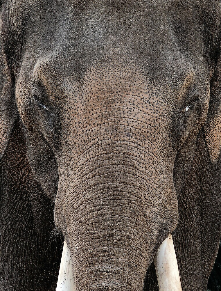elephant by eclectic1