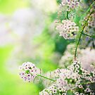 Summer Flowers by Tammy Hale