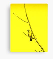 striking bird Canvas Print