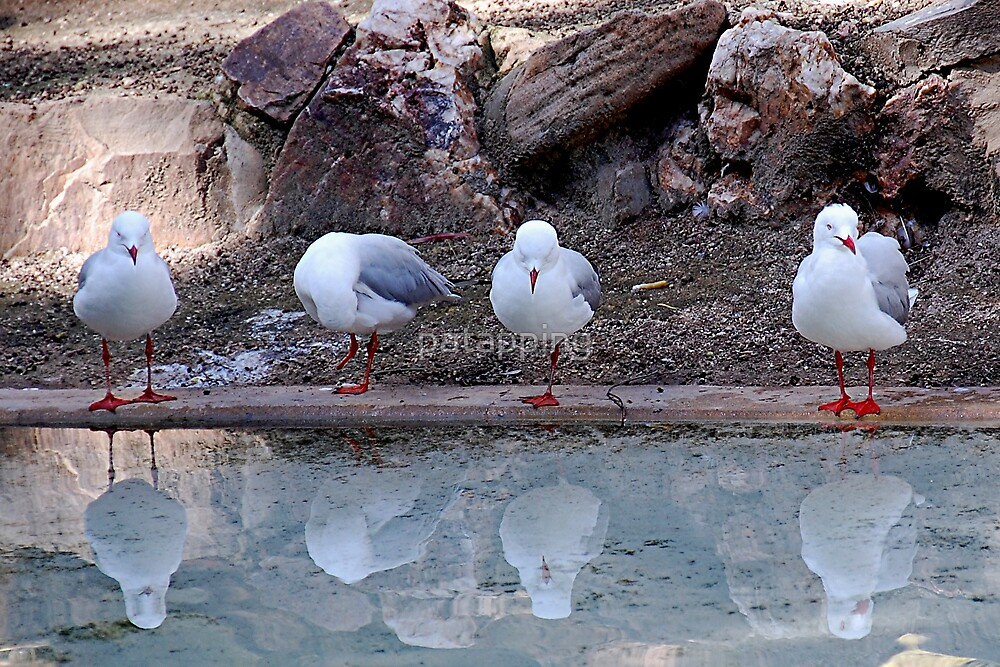 Four Amigos Adelaide , Sth Aust by patapping
