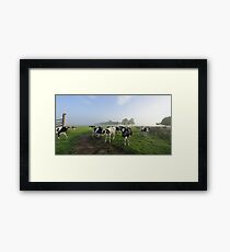 Foggy morning Brundee dairy pastures Framed Print