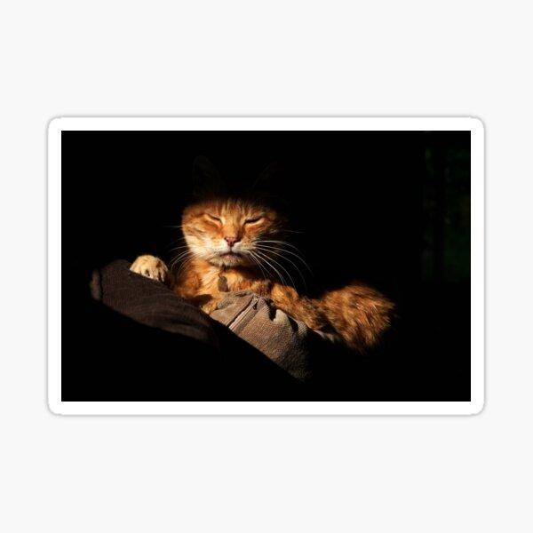 Ginger cat with dark background Sticker