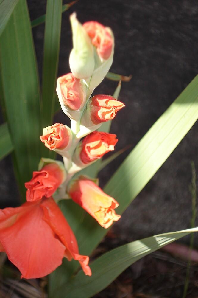 near bloom by yellowcar9