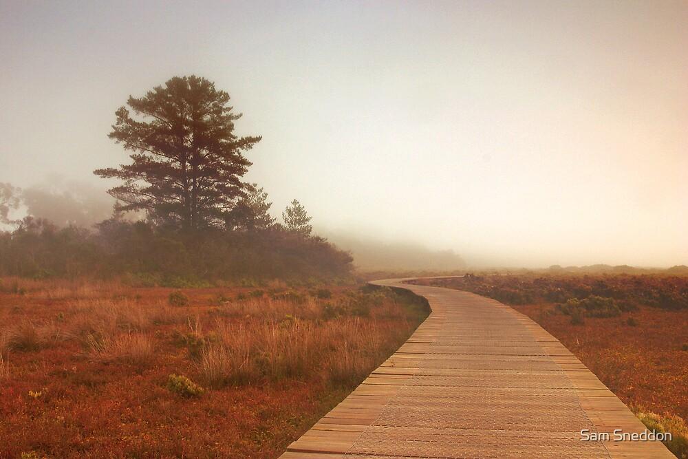 Fog over the mangroves by Sam Sneddon
