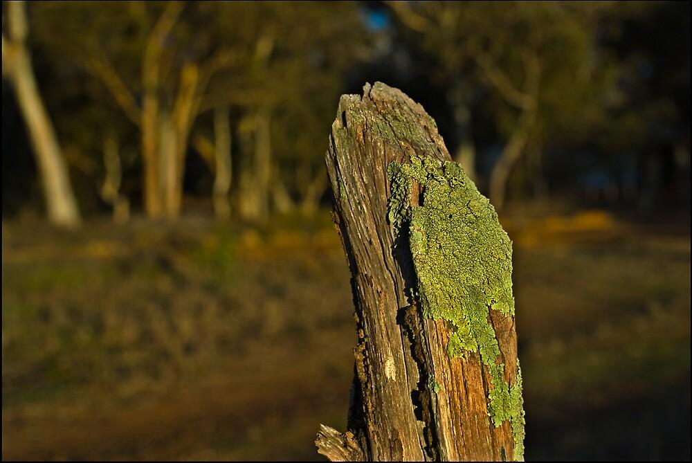 Lichen by Damiend