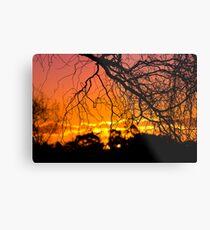 Salix Tortuosa (tortured willow) at Sunset. Metal Print