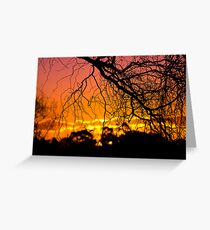 Salix Tortuosa (tortured willow) at Sunset. Greeting Card
