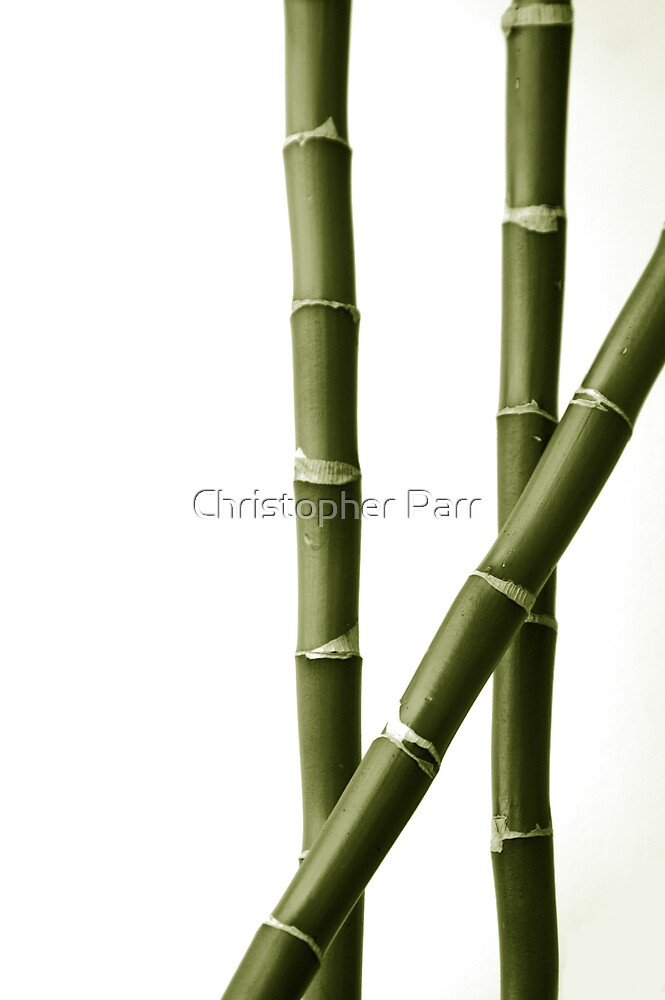 Bamboo by Christopher Parr
